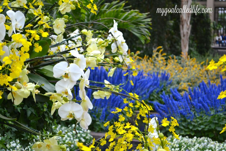 Longwood Gardens1